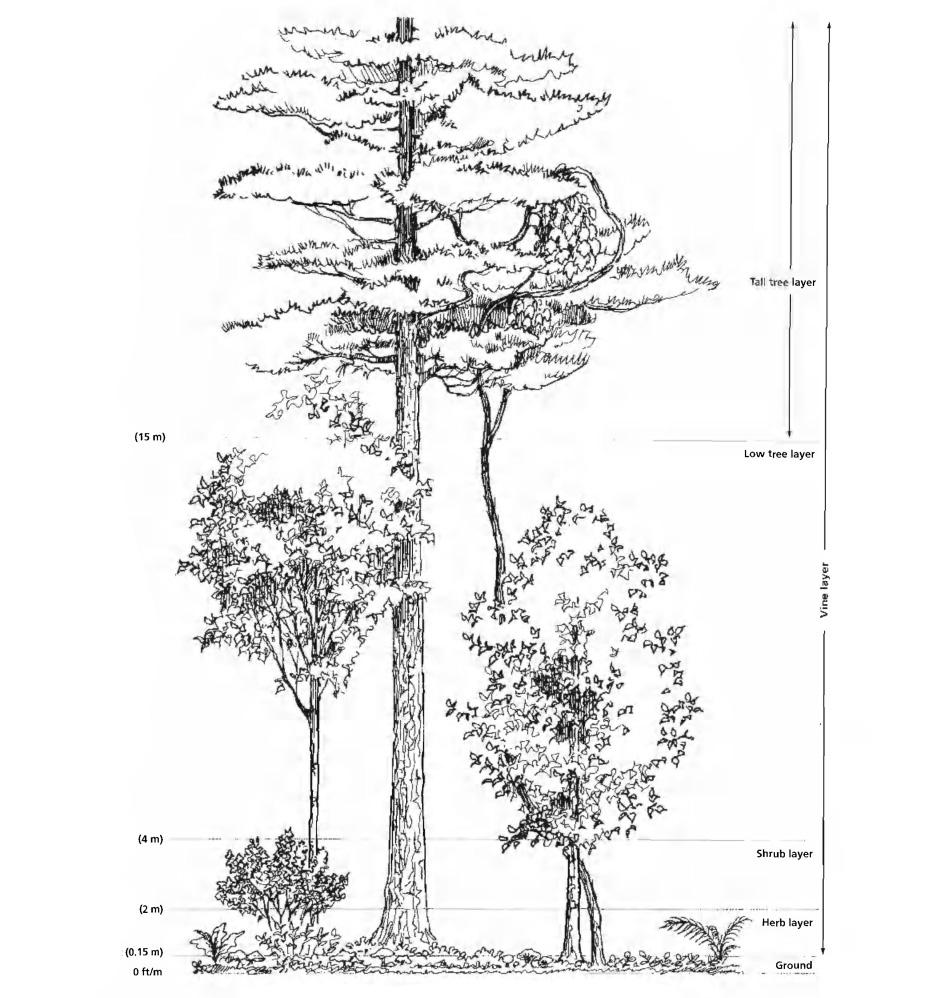 felixx-rijnvliet-foodforest.jpg